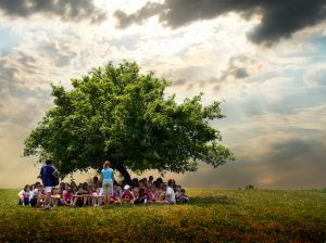 Summer camp under a tree